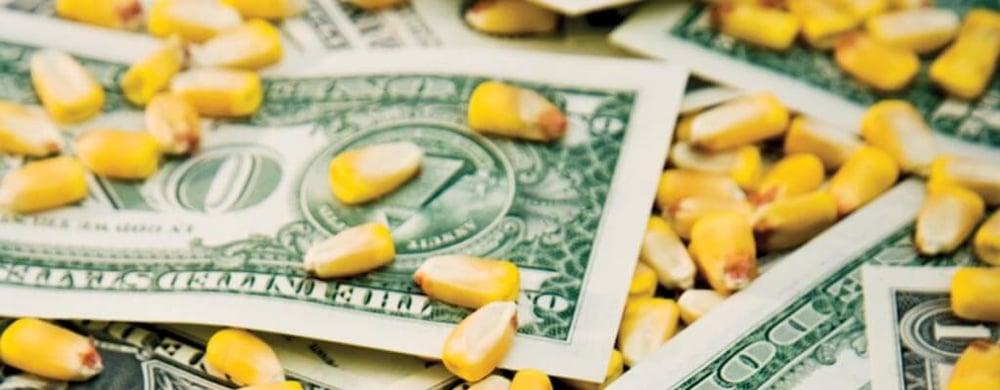 corn-and-money