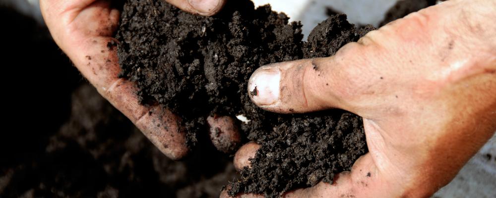Dirt-2.png