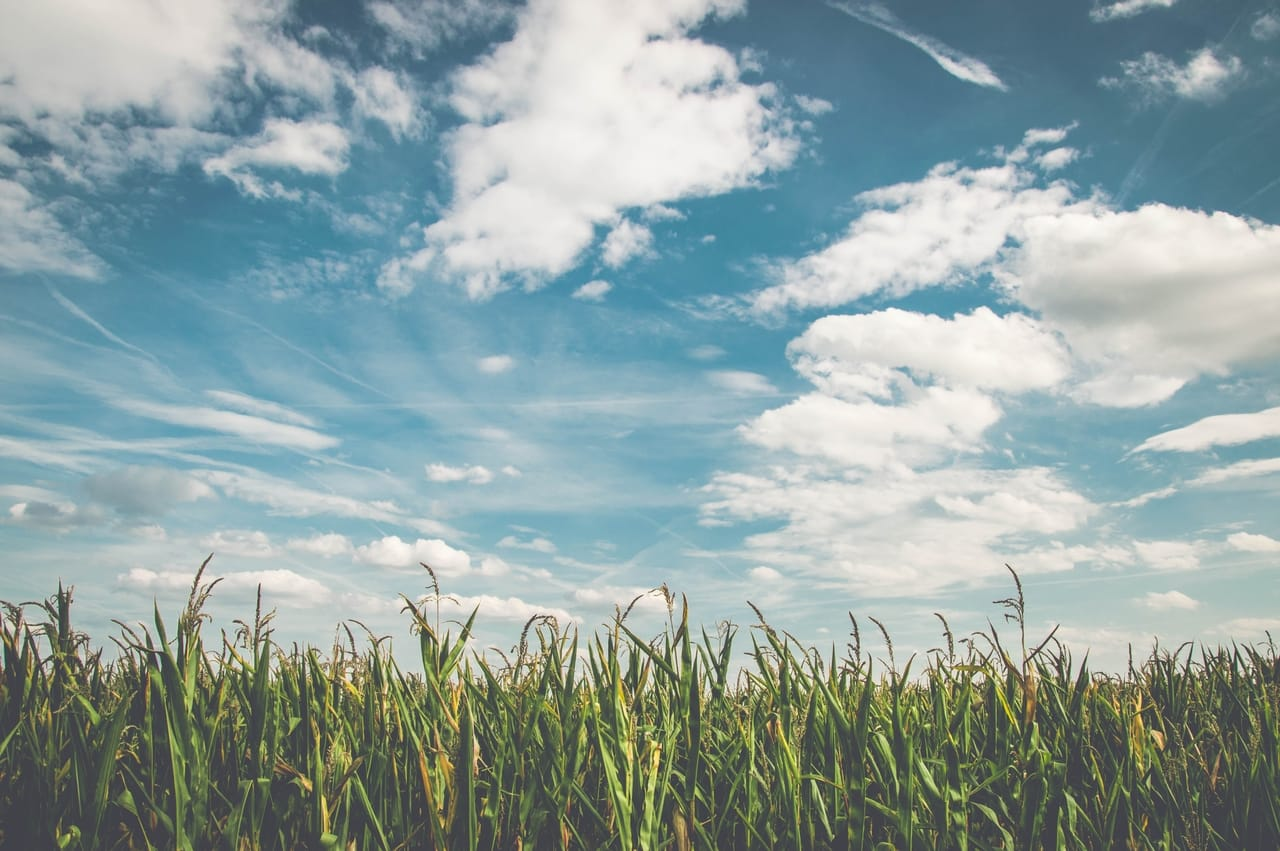 cornfield-and-blue-sky-with-clouds