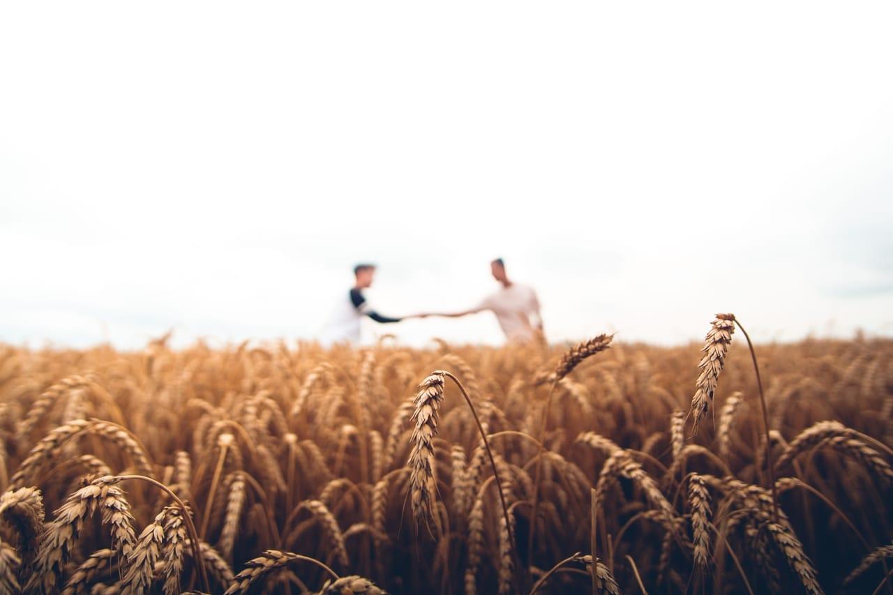 two men shaking hands in a field