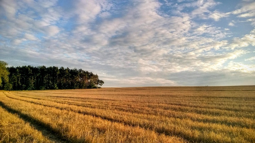 agriculture-cereal-crops-clouds