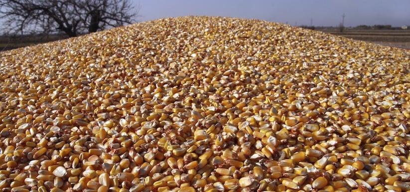 corn-1.jpg