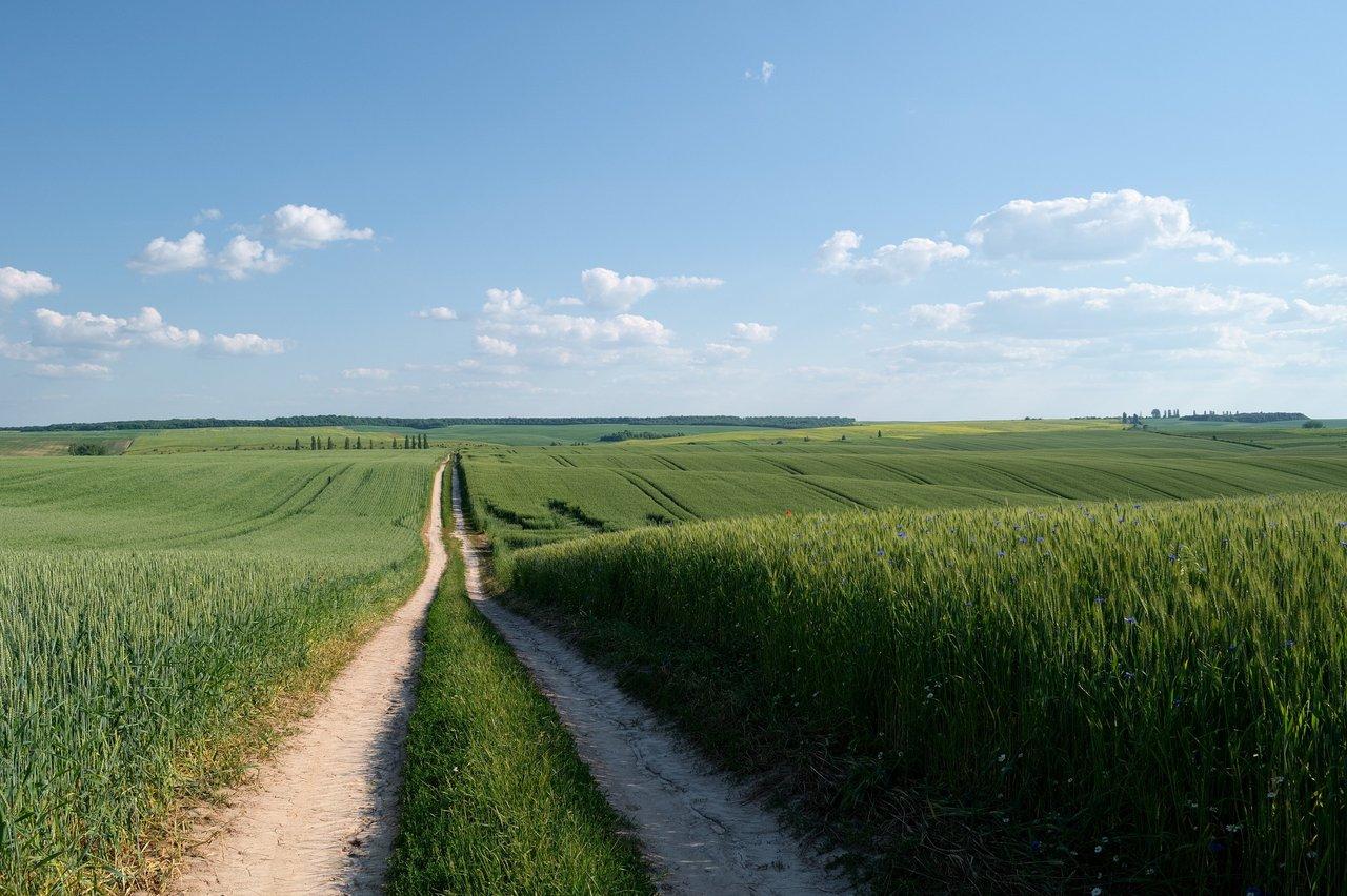 crops-in-field