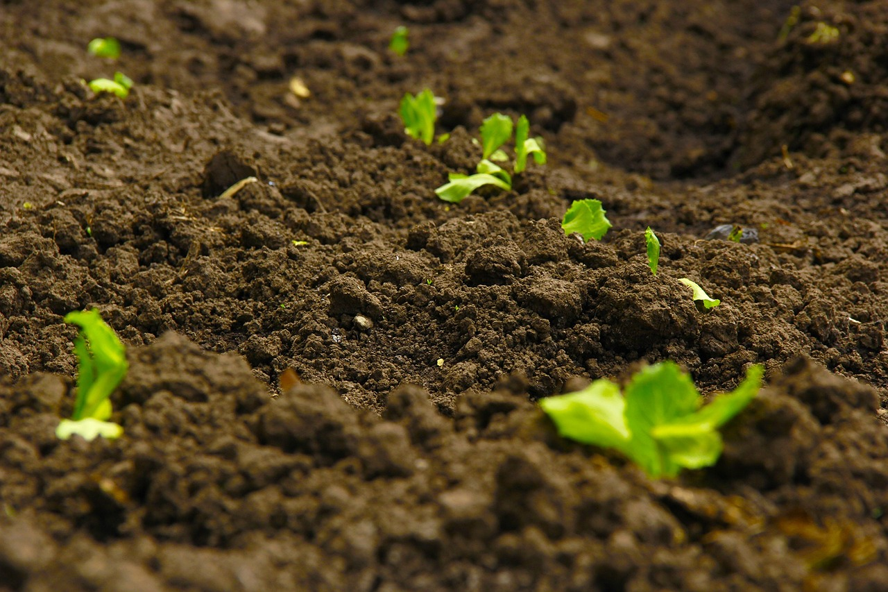 soil-and-green-plants-growing