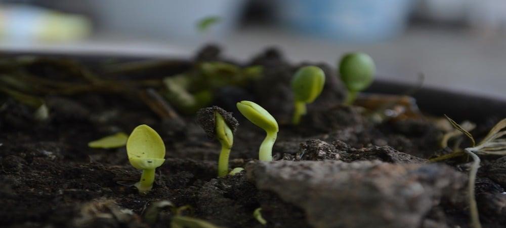 plant-health