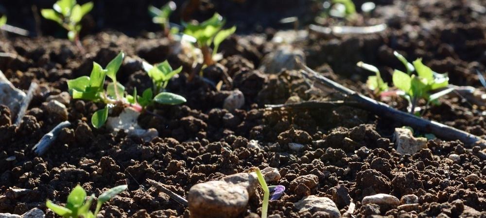 soil life