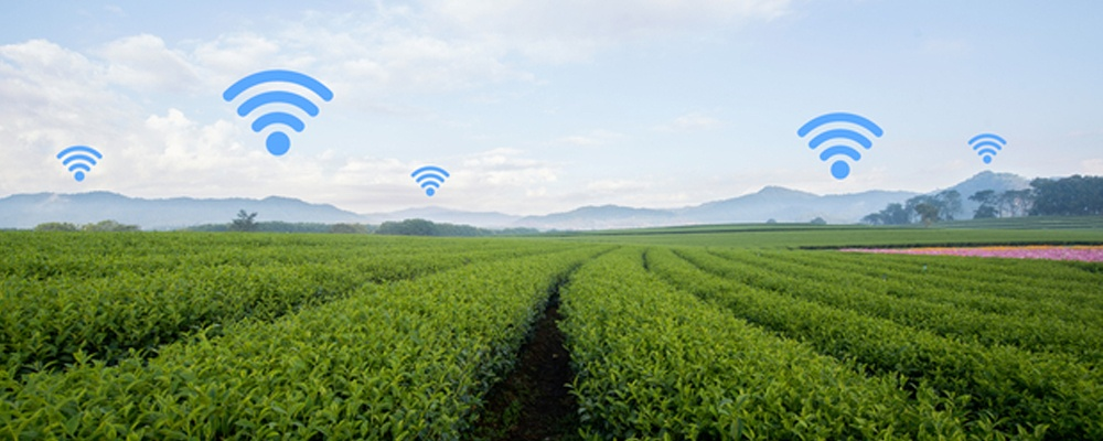 Consolidation in Row Crops: Big Data As A Vital Source of Knowledge for Producers