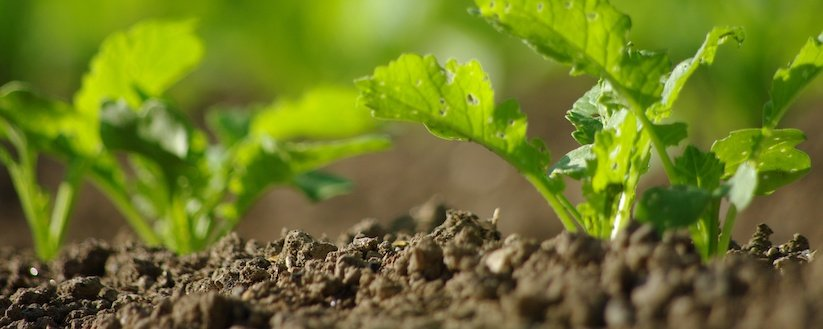 Re-Imagine Soil: Sustainable Agriculture