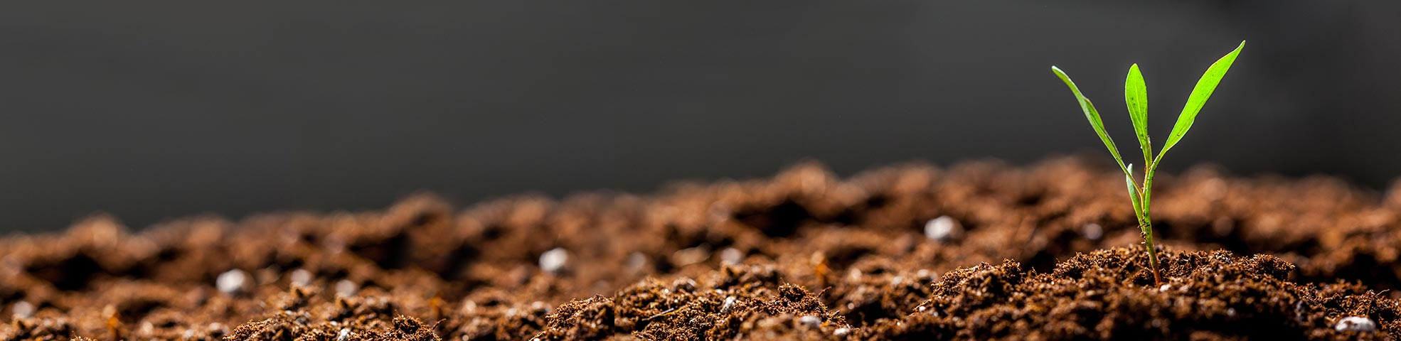 What Is Soil Health Management & Why Is It Important?   SoilRight