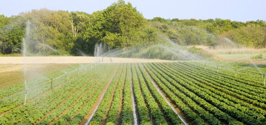 Soil and Plant Health—Do Fungicides Work? | SoilRight