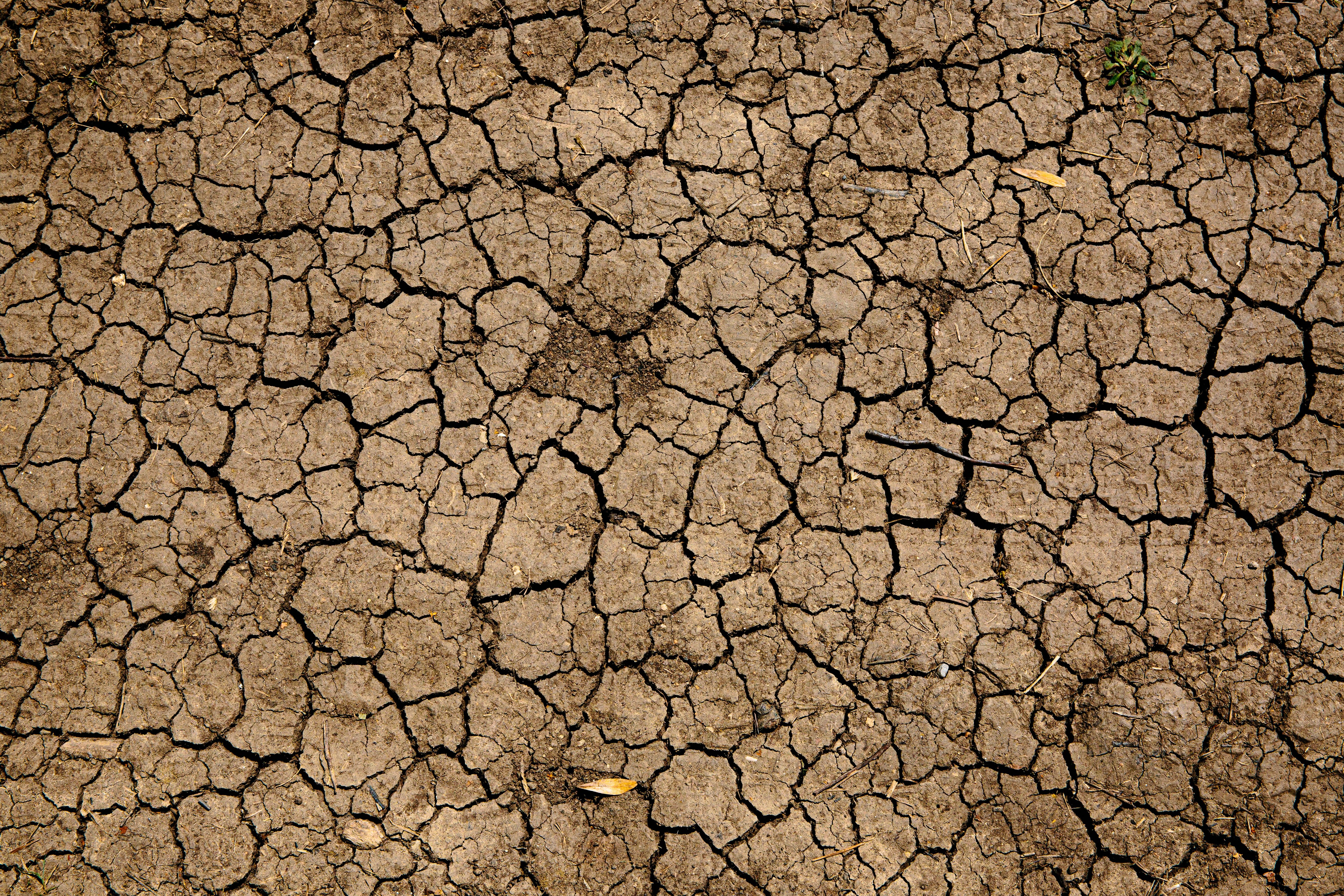 Opportunities Provided by Drought