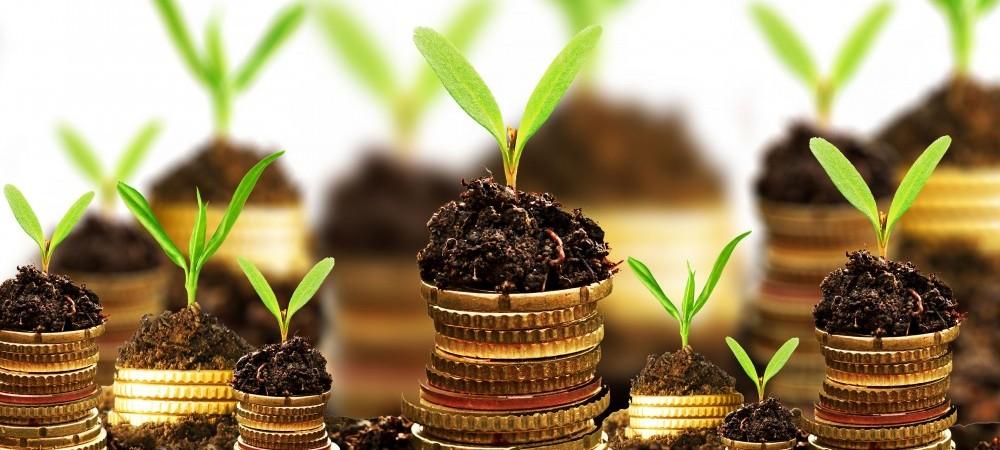 Best Practices for Improving Profitability | FamilyFarms Group