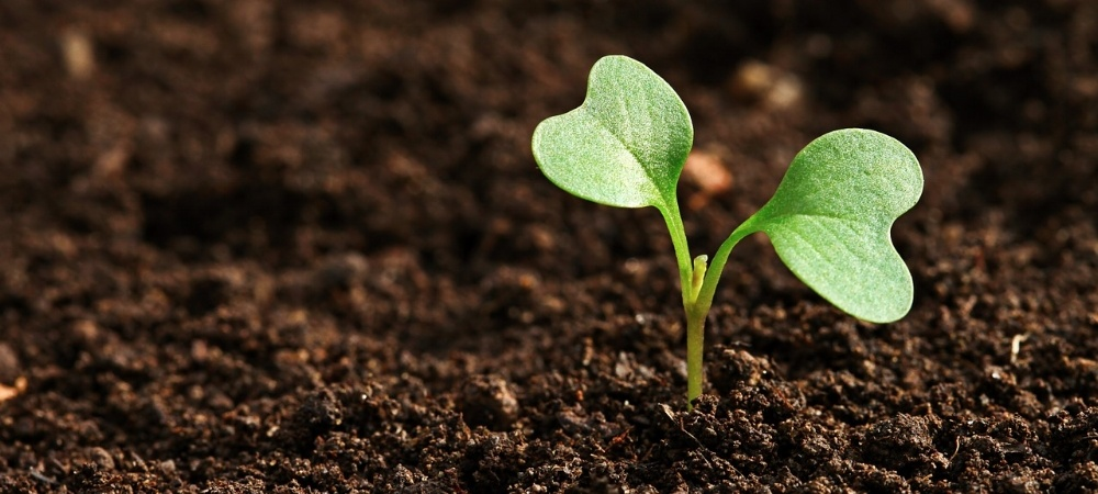 Optimal Soil Health: Just What the Doctor Ordered