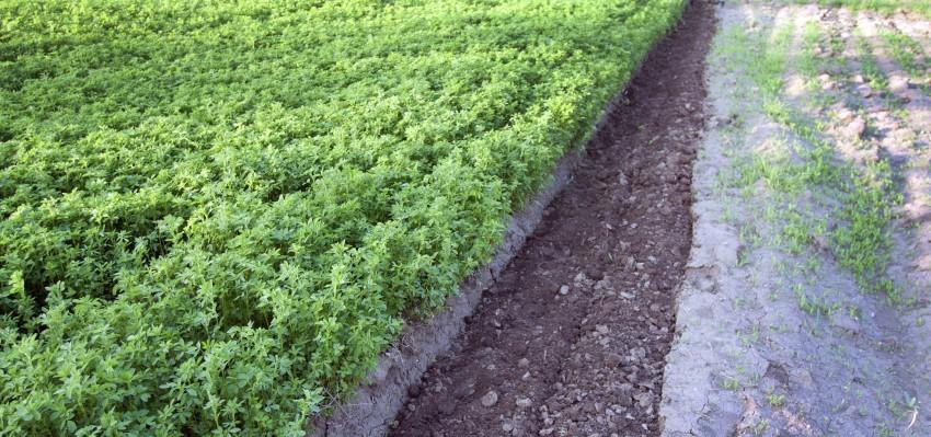 Perspectives on 2015 Rents: Tenant, Landowner, Farm Manager