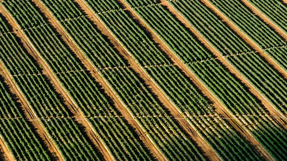 Risk Management and the Row Crop Farmer