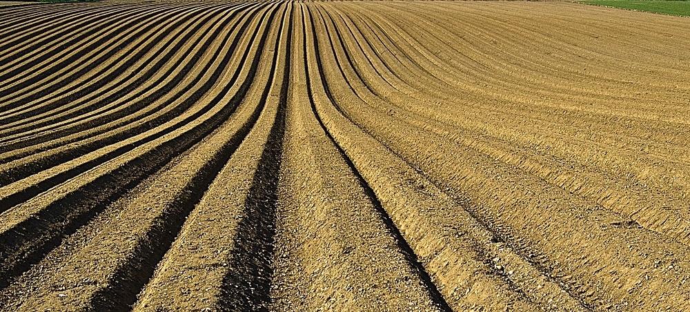 How Often Should I Test My Soil?