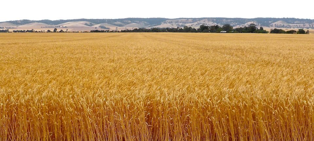 The Importance of Planning Ahead for Grain Sales